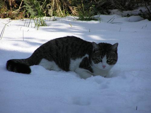 frida nella neve