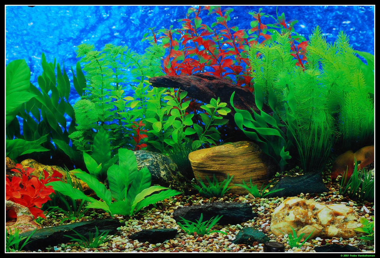 Current image within printable fish tank background