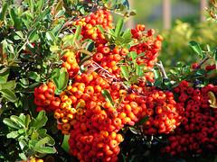 Berries!!
