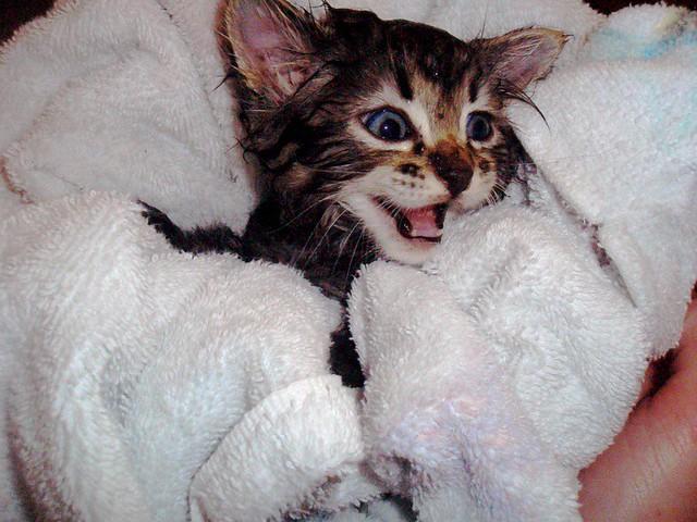 बिल्ली का बच्चा + स्नान = ओह.