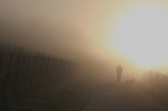 Pilgrimage into the light
