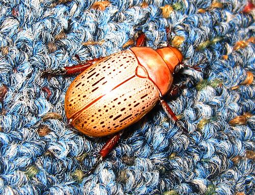 Bug on the Rug