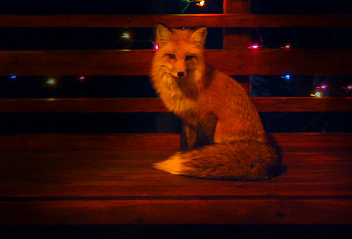 Holiday Fox