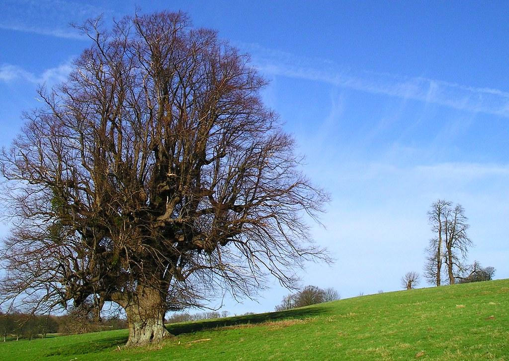 Book 1, Walk 19, Hever to Leigh 3 Trees above Penshurst, 14 Jan '07.