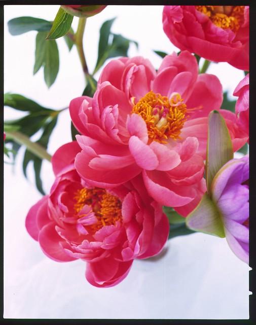 Fleurs ! 5