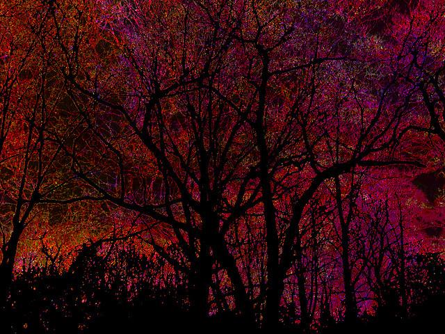 Winter Hope Springs Eternal