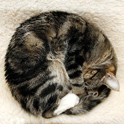 Cat? Wheel?