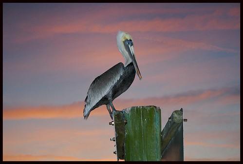 sunset sky color bird nature bravo florida photos outdoor pelican outdoorphotos tomokastatepark outdoorphotography jimbrekke jimsoutsidephotos impressedbeauty avianexcellence jimbrekkecom jamesbrekkecom