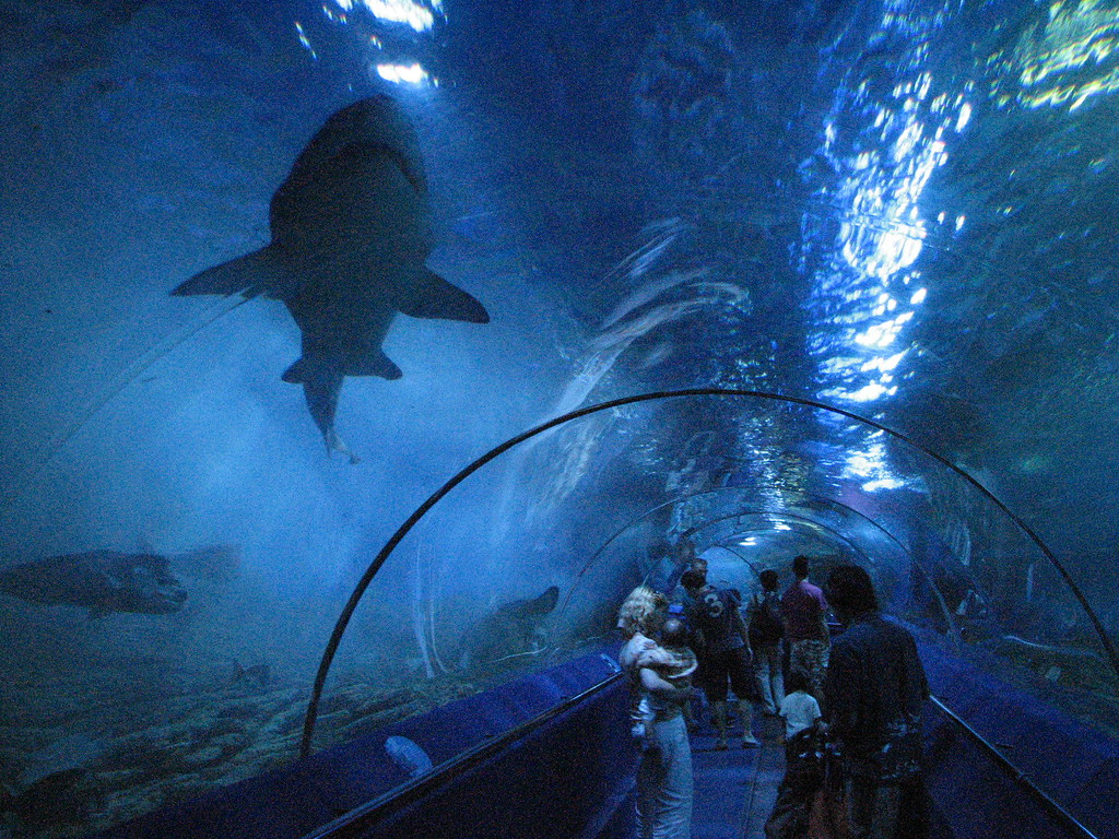 10 Largest Aquariums In The World With Photos Map
