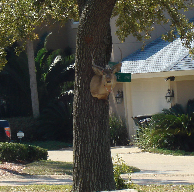 Deer Mount on Tree in Front Yard, Ocean Springs MS
