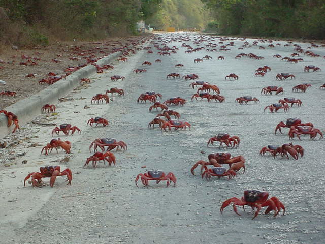 Red crab empire