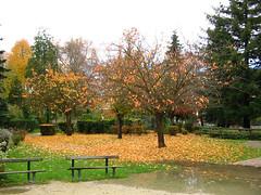 06-11-19_automne_00