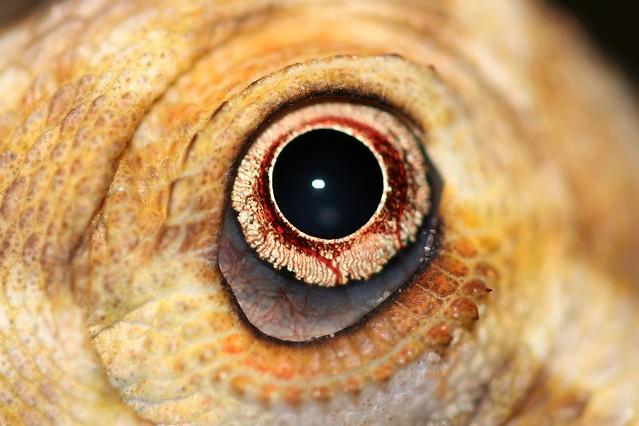 Eye love macros...