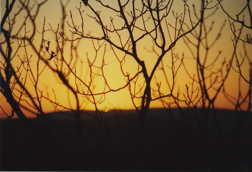 trees sunset slr film 35mm georgia pentax dusk p3 rocktown