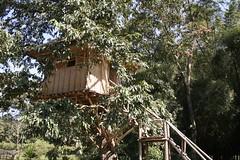 tree, house, tree house, jungle,