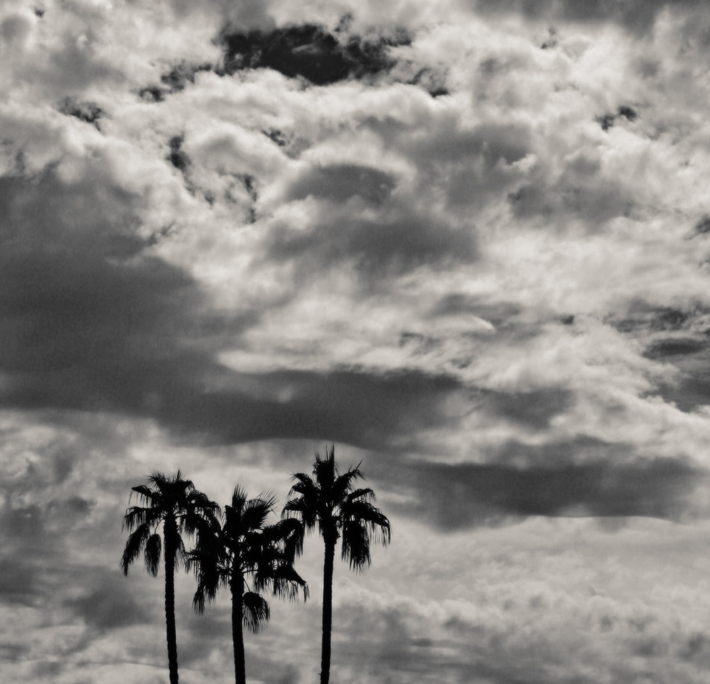 Palm Trees and Cactus, Three Palms and Clouds, 2006