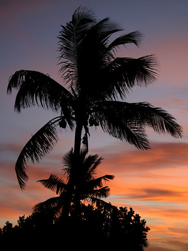 sunrise florida palm keylargo 123travel