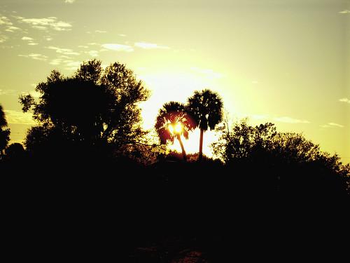 sunset silhouette landscape florida okeechobee
