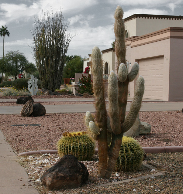 Palm Trees and Cactus:  Echo Cactus