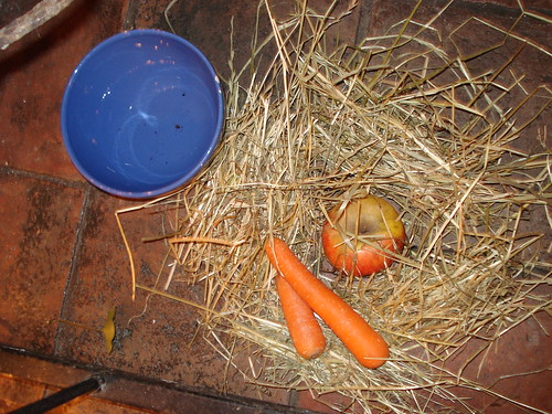food for the reindeer