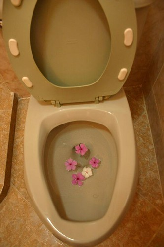 flowers in the toilet
