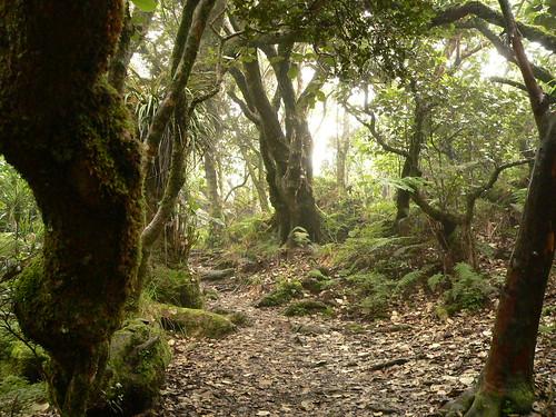A visiter pendant un séjour à la Réunion; la forêt de Notre-Dame de la Paix.