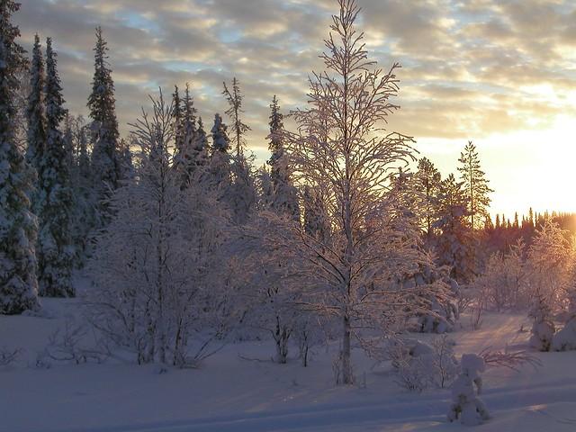 Ramas de Nieve