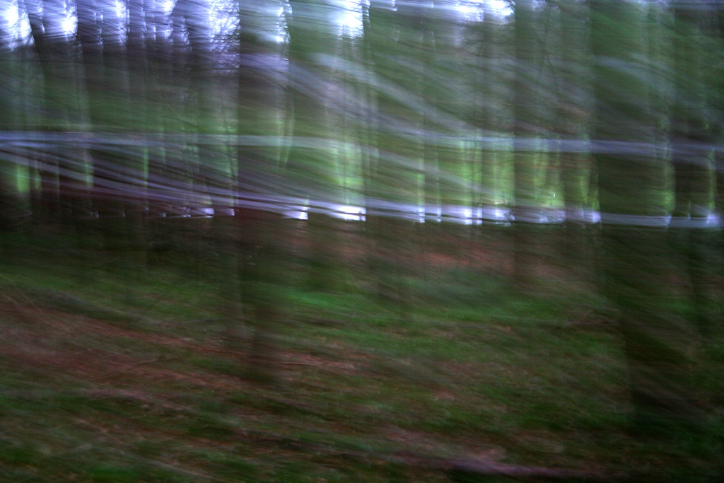 The moving forest