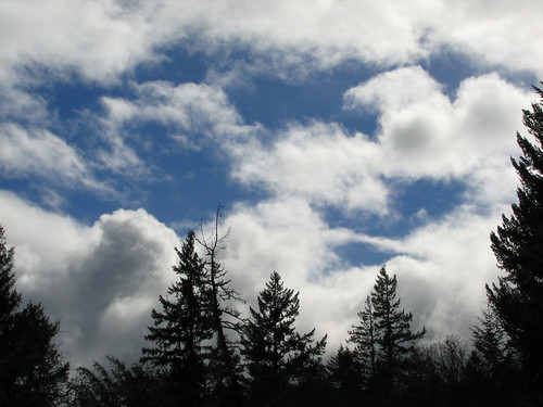 trees sky clouds