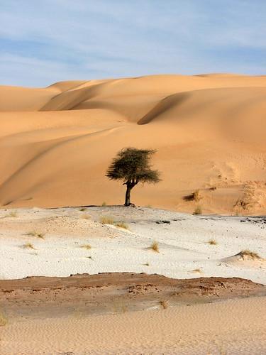 africa tree sahara is sand desert sable powershot getty s3 gettyimages mauritania mauritanie outstandingshots adrar powershots3is s3is 25faves diamondclassphotographer ergouarane melvilleb