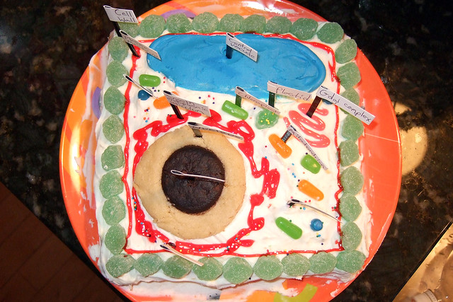 3D Edible Plant Cell Project http://www.flickr.com/photos/mandyslo/423597125/