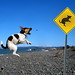 Watch out for flying dogs... by mr.nz