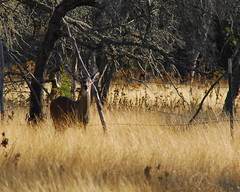 deer hunting day2 (1)