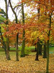 06-11-19_automne_03