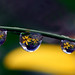 drops of yellow petals by Steve took it