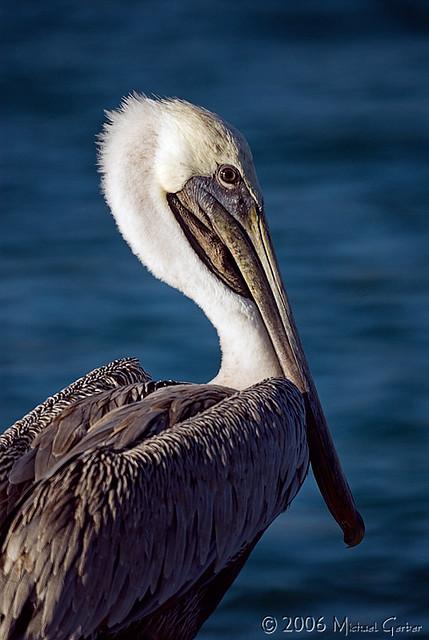 pelican5664pcw