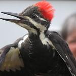 Photo Observatoire d'oiseaux de Tadoussac