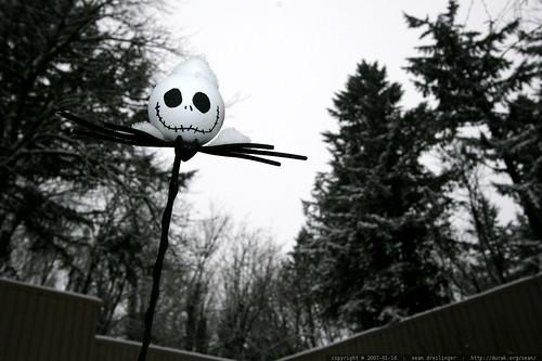 jack the pumpkin king, snowed in    MG 9195