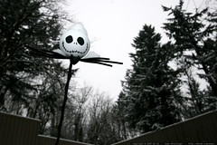 jack the pumpkin king, snowed in    MG 9195