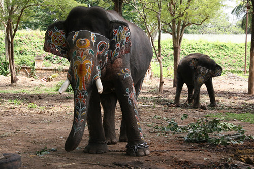 Painted Elephants Photography Painted Elephants Flickr