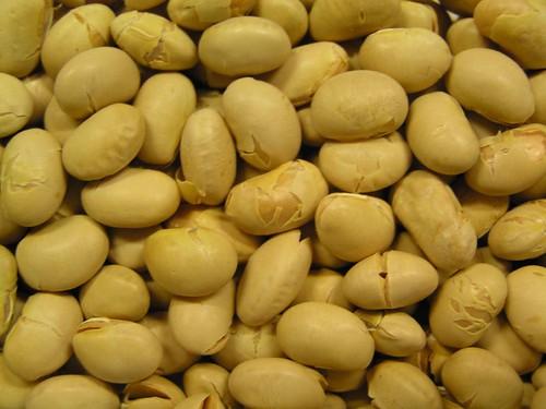 大豆(Daizu) soybeans