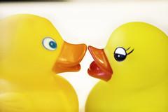 Kissing Rubber Ducks