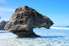 East Coast Barbados