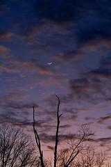 Moon and Venus - Portrait