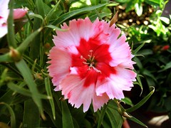 other pink flower