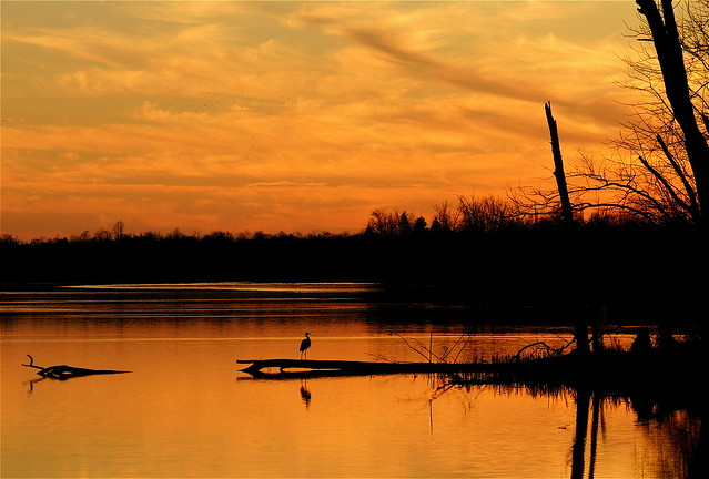A Blue Heron Watching The Sunset