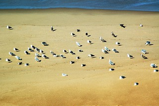 Image de FKK Praias de Bicas (Naturista). bird praia beach sand areia seagull gustavo gustty veríssimo praiadasbicas gustavoveríssimo wwwflickrcomphotosgustty