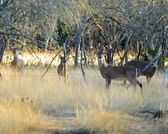 deer hunting day2 (16)