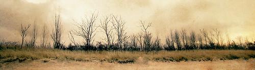 old trees light sky panorama sun storm beach nature grass sepia clouds sand antique wide treeline