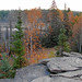 Canadian Shield, Algonquin